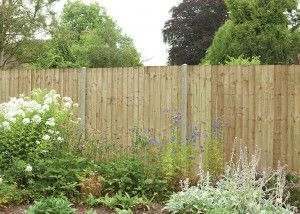 Forest - Featheredge Fence Panel - Pressure Treated - Natural Timber