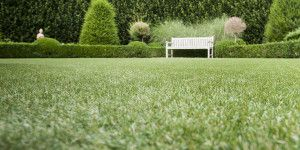 Namgrass - Artificial Grass - Luxury Range - Vision